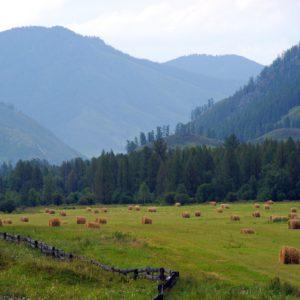mountain altai, landscape, mountains
